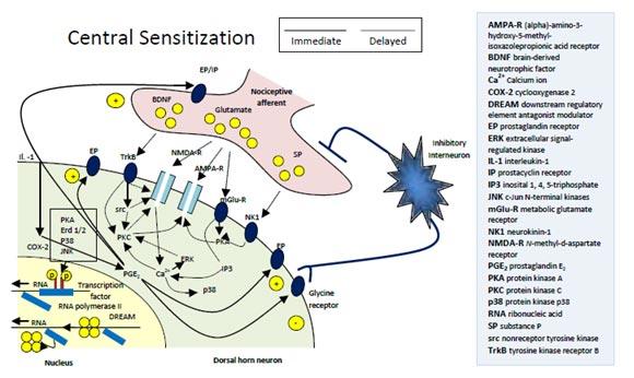 Neurontin For Peripheral Neuropathy